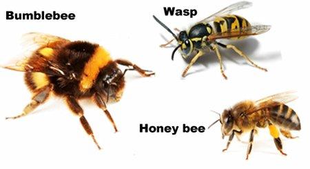 Dublin Beekeepers